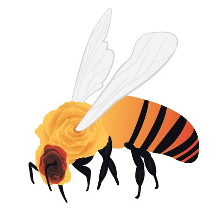 A bee vector illustration on a white background isolated