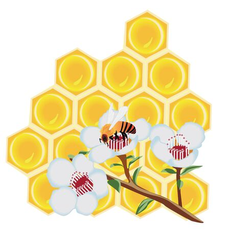 A  honeycomb and a bee on a flower vector illustration on a white background isolated