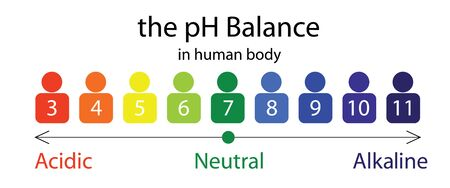 The PH balance scale chart in a human body vector illustration infographics Vectores