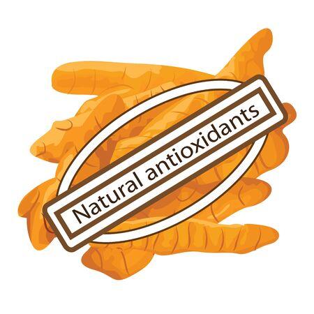illustrazione vettoriale di spezia antiossidante naturale curcuma su sfondo bianco