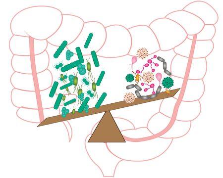 Intestinal bacteria flora. Good and bad bacterias. Vector illustration