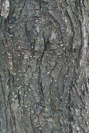 Bark of an old tree textured