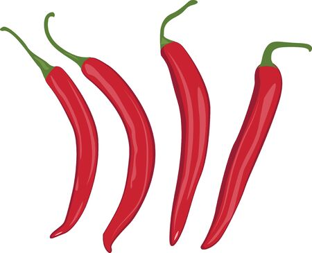 Red chilli peppers vector illustration on a white background