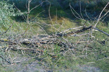 dry woods on the ground 写真素材