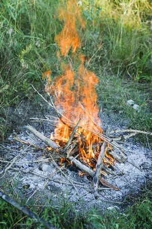Campfire prepared for barbecue in a forest