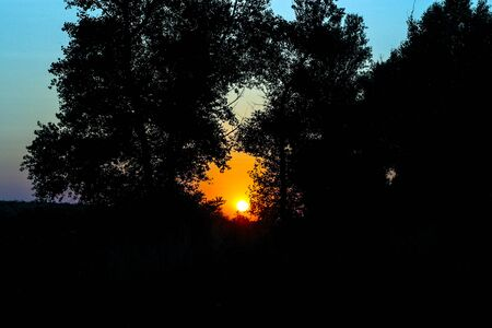 Sunset in the forest landscape