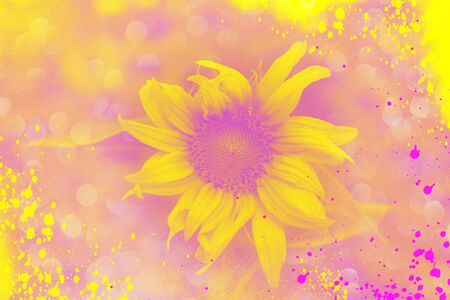 The sunflower is on the blurred background and bokeh effect in pink and yellow colors. 写真素材