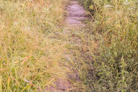 The scenery with the Pathway throw the field with weed grasses grown at a rural locality in Eastern Europe