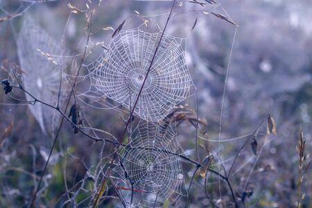 spiderwebs in a field. Close up Cobweb