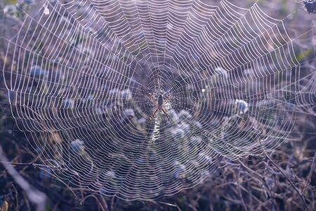 A big spider at his spiderweb 写真素材