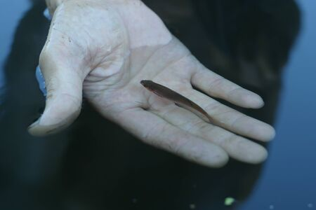 Small fish in a hand underwater fishing concept. A man let a small fish go 写真素材