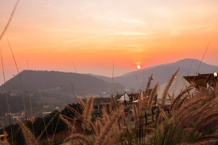 Wild spicas with mountains scenery sunset view as a background 写真素材