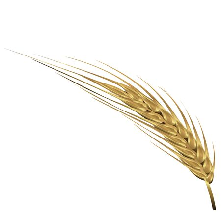 Spica of wheat vector illustration isolated on a white background  イラスト・ベクター素材