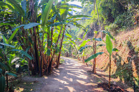 A park zone with palm trees growing along an village road in countryside in a sunny weather