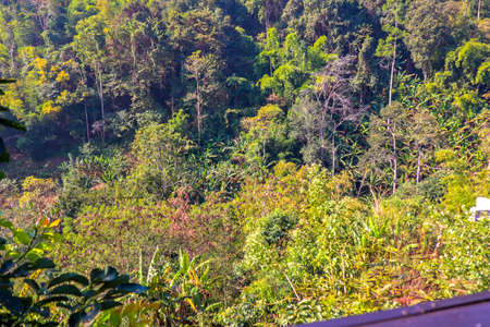 Jungle in Thailand photo background