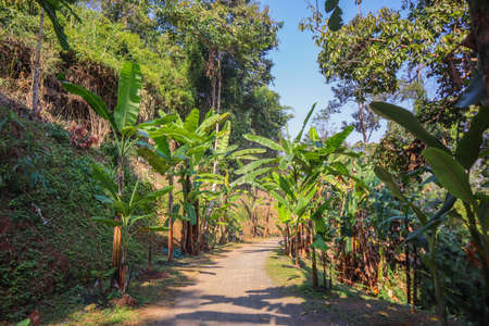 A park zone with palm trees growing along an village road in countryside in a sunny weather. The photo can be used as a background picture