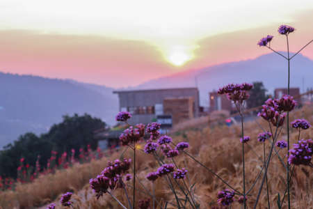 summer nature background with grass and flower village farm house and mountains back with bright sunset in the evening 写真素材