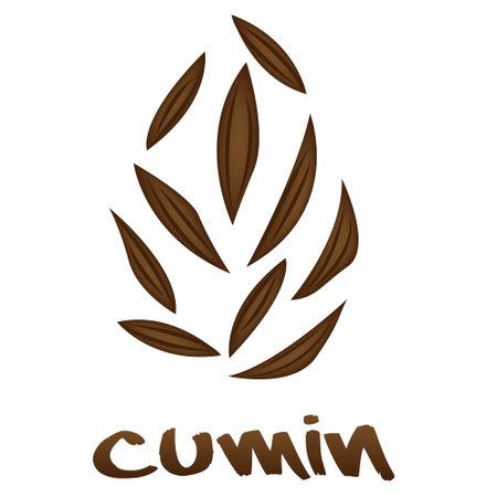 Cumin Zira seeds vector illustration on a white background