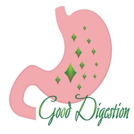 Good digestion stomach vector illustration on a white background isolated