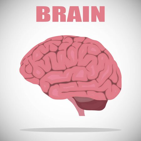 Brain, brain icon, realistic human brain with gyrus isolated on white. Vector illustration. Vector