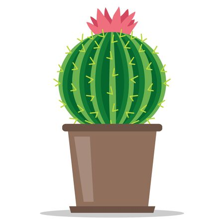 Cactus, blooming green cactus with shadow in a flowerpot isolated on white background. Vector illustration of a cactus in a flowerpot.