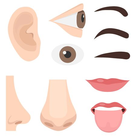 Illustration of Different Parts of the Face. Human face parts organs icons. Body parts. Vector
