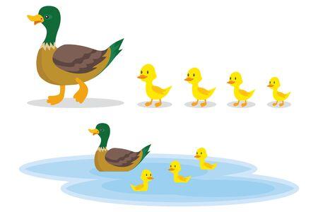 Un pato salvaje con patitos camina hacia el estanque. Un pato con patitos pequeños nada en el agua. Ilustración de dibujos animados de un pato. Vector