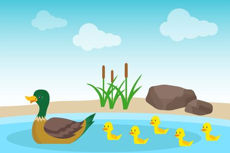 A wild duck with ducklings swims in a pond against a background of stones and green reeds. Illustration of a wild duck family. Vector, cartoon illustration. Vector.