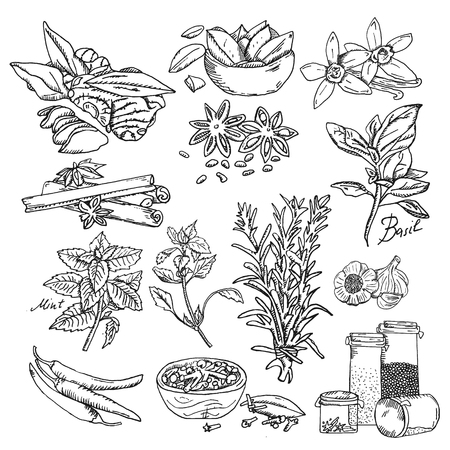 Vector background with hand drawn sketch spices. Organic and fresh spices illustration. Vektorové ilustrace