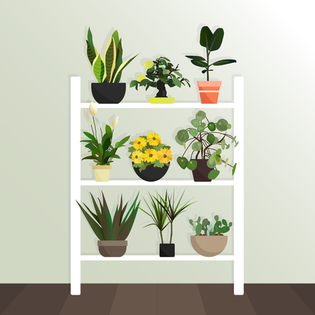 Collection of vector houseplants. Flat style. Flowers stand on the shelves. Interior Design. green plant in pot, flowerpot bloom