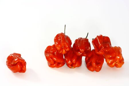 Red habanero chillies isolated