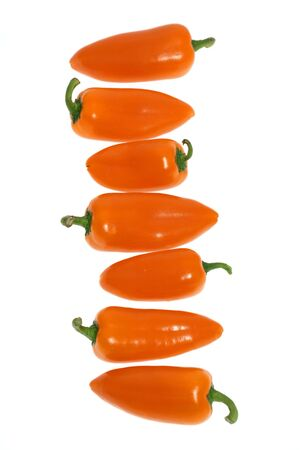 small orange bell pointed peppers in row, isolated, close-up, soft focus, white background, no shadow Banque d'images
