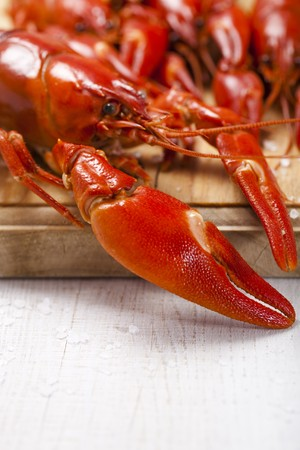 cooked freshwater crayfish on wooden board, shallow DOF Stock Photo - 7309786
