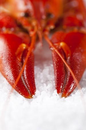 cooked freshwater crayfish on sea salt Stock Photo - 7309761
