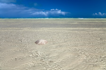 sand dollar: sand dollar in the sea with sky and horizon on background, shallow DOF