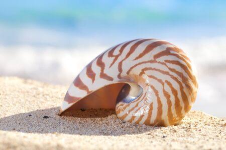 duna: shell de Nautilus en una playa de arena, contra las olas, dof superficial