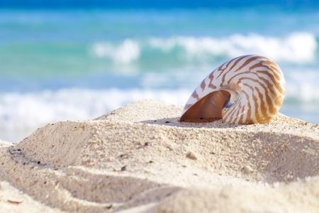 Nautilus Shell auf der Strand Sand-, gegen die Meereswellen, shallow dof