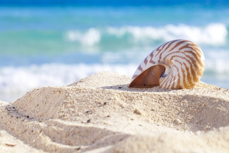nautilus shell on a beach sand, against sea waves, shallow dof photo