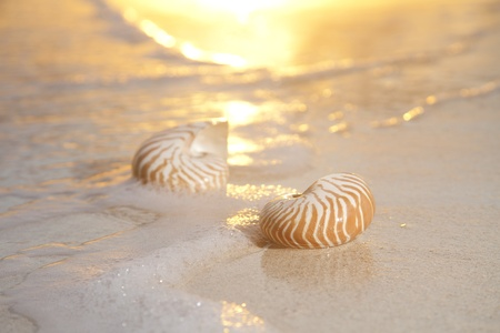 overexposed: two nautilus shells in the sea , sunrise, very very soft warm overexposed light   Stock Photo