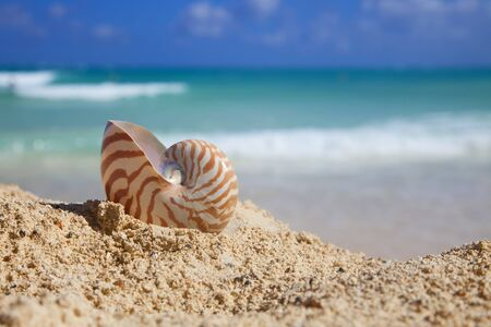 nautilus shellon beach  and blue tropical sea, shallow dof photo