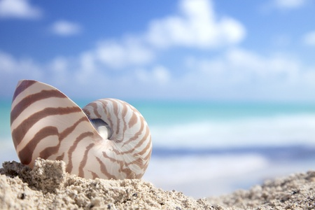 nautilus shell on  a caribbean beach, shallow dof