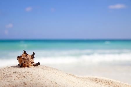 Murex Endivia sea shell on a beach, emerald green sea on background photo
