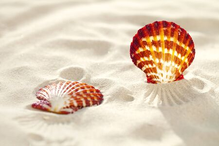 bright Scallop shell on fine white beach sand, shallow dof Stock Photo - 8746990