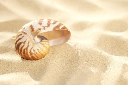 small nautilus shell on beach sand  and tropical golden sun light, shallow dof photo