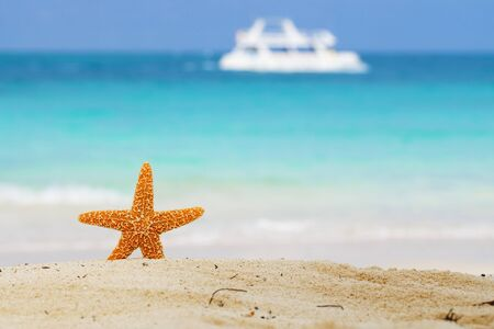 starfish on beach, blue sea and white boat, shallow dof