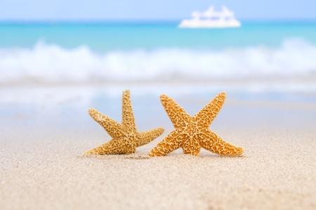 etoile de mer: deux étoiles de mer sur la plage, mer bleue et bateau blanc, peu profond DDL