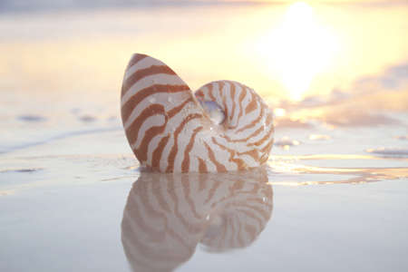 nautilus shell in the sea , sunrise. highkey light, shallow dof photo