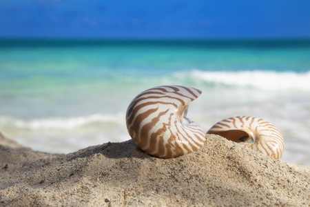 two nautilus shells on beach  and blue tropical sea, shallow dof Stock Photo - 9047417