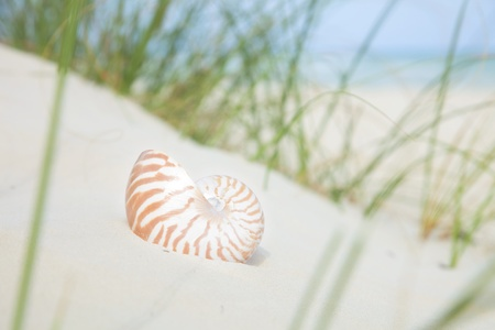 nautilus shell on sand, beach grass  and tropical sea background Stock Photo - 9047355