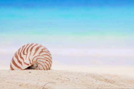 nautilus shell on a beach sand, against blue sea, shallow dof